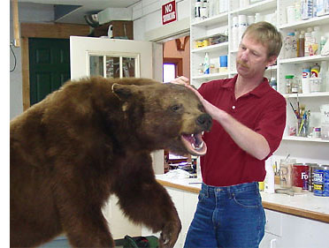 Zanesville, Ohio taxidermist Dan Jennings at work